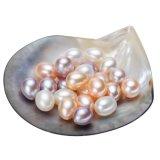 Perla de agua dulce cultivada venta al por mayor de la gota para la joyería de DIY