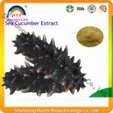 Usine GMP fournit un extrait de concombre de mer pure
