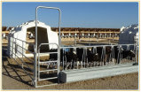 パネルを囲っている電流を通された楕円形の柵の牛