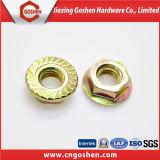 Noix hexagonale galvanisée de la bride DIN6923 avec l'amorçage Dentelure-Brut