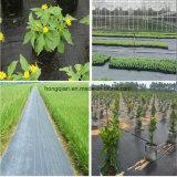 اعتمد منظر طبيعيّ [شنس] [بّ] حديقة تغطية [ويد] حصير بناء مع [فكتوري بريس]