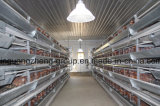 Les matériels pour la Chambre de couche et de poulet pour l'Algérie