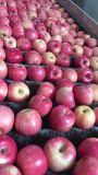 FUJI fraîches, Huaniu, Gala, Golden, Qinguan Apple