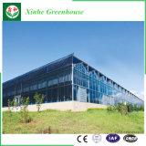 Buen invernadero del vidrio del policarbonato del jardín del precio