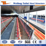 La structure métallique a conçu la Chambre conçue d'aviculture de structure métallique de Chambre d'aviculture