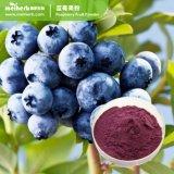 Extrait de bleuet naturel de poudre de jus de bleuet