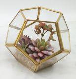2017の新しい人工的なプラント花の陸生動物飼育器のガラス鉢植えなSucculent