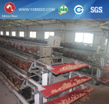 Matériel agricole 3 Niveau 4 Niveau de la volaille de la cage de la batterie