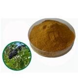 Estratto siberiano Eleutheroside del Ginseng per il supplemento degli alimenti