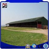 家を耕作しているプレハブの構造スチールの牛