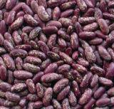 紫色の斑入りの腎臓豆