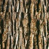 Pellicola reale no. idrografico W450f1060b di stampa di trasferimento dell'acqua di disegno della corteccia di albero