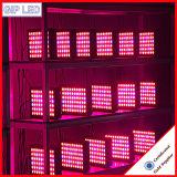 Promozione! Weixinli 300W LED si sviluppa chiaro per la serra