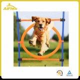 Agilidad del perro de animal doméstico que entrena al cañizo al aire libre del salto