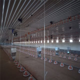 La volaille conçue moderne de structure métallique renferment et ferme avicole