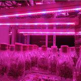Le large spectre de DEL se développent léger, prix concurrentiel pour la serre chaude de Graden de culture hydroponique