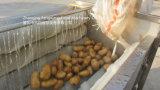 Tipo coco de la colada de la raíz del loto del jengibre que pule el equipo de Peeler con capacidad modificada