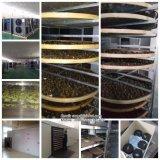 Processamento de secagem de frutas e legumes a linha de produção / máquina de secagem de alimentos