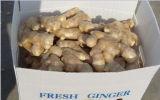 Chino jengibre secado al aire con alta calidad de exportación