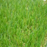 Bsb Artificial Grass From China para Landscaping