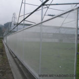 Chaîne/anti réseau de trame d'insecte d'armure toile pour la serre chaude