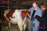 De digitale Dierlijke Ultrasone klank van het Landbouwbedrijf van de Echografie van de Ultrasone klank van het Vee van de Ultrasone klank van de Scanner van de Ultrasone klank van de Pols Veterinaire Paarden, de Echoscopie van het Fokken van het Vee