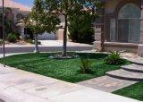 Het superieure Valse Gras van de Tuin van de Huisvesting van het Gras