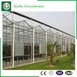 Estufa de vidro Growing dos vegetais da fruta da flor