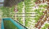 Estufa esférica no ambiente ecológico