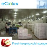Quarto frio congelador/cold storage para os frutos e produtos hortícolas