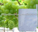 Saco del papel de categoría alimenticia de la seguridad de uva
