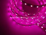 Het LEIDENE Licht van de Band voor Roze Kleur met de Goedkeuring van Ce