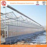 토마토 꽃을%s 유리제 농업 온실