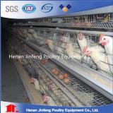 دواجن تجهيز آليّة دجاجة [بتّري كج] لأنّ عمليّة بيع