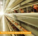 Гальванизированный тип клетка h батареи машинного оборудования фермы цыпленка Breeding слоя
