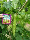 Promotor de crescimento de Unigrow em alguma plantação vegetal