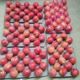 中国の新しく赤いQinguan Appleの最上質