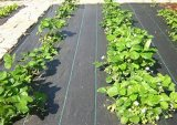 Matérias têxteis tecidas PP da esteira/horticultura de Weed/tela da paisagem