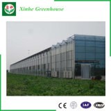 Agricultural를 위한 쉬운 Assemble Venlo Type Glass Greenhouse