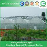 鉄骨構造との野菜栽培のためのトンネルの温室