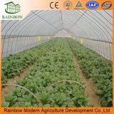 Estufa do Tomate da Extensão da Agricultura Única com a Película Plástica do Po
