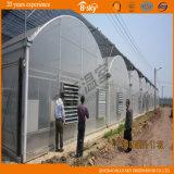 Vasto Use Multi-Span Plastic Film Greenhouse per Seeding