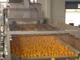 5t/h a linha de produção de sumo de citrinos