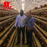 Engrais conçu neuf Euipment de Chhicken et système alimentant de poulet