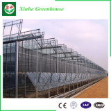 Invernadero gemelo de aluminio del jardín del policarbonato de la pared