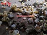 El plástico del PE recicla la desfibradora de la esquina del tubo de la máquina