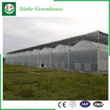 Casa verde do policarbonato econômico da extensão de Muti com sistema hidropónico