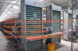 kooien van een van het Type de Nieuwe Automatische van het Gevogelte van het Landbouwbedrijf van de Laag Kip voor Verkoop