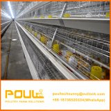 Jaula de Pollo Cage de reproduction automatique pour les poussins de poulet