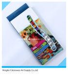 12 * 12ml couleurs peinture à l'huile non toxique en tube d'aluminium pour le dessin